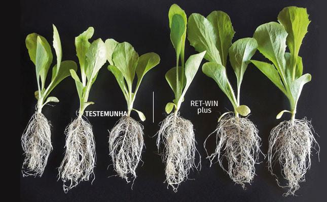 Beneficios en el cultivo RET-WIN plus